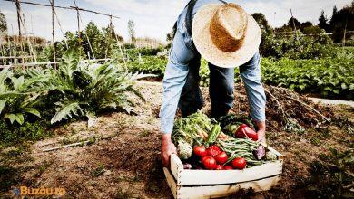 Photo of Top 10 idei afaceri profitabile în agricultură, în 2020