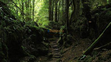 Photo of Comoară descoperită în pădurea de la Spătaru!