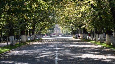 Photo of Primăria înlocuiește 24 de arbori pe Aleea Centrală din Parcul Crâng